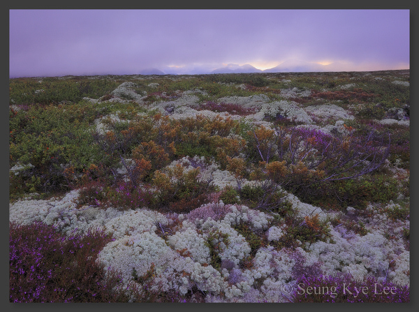 Rondane, Spranget, national parks, fine art landscapes, mountain photography, Norwegian moors, lichen photos, heather images, nasjonalparker, landskapsfoto, fjellbilder, naturfoto, norske fjell